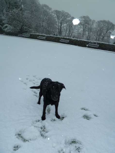Jake in the snow.