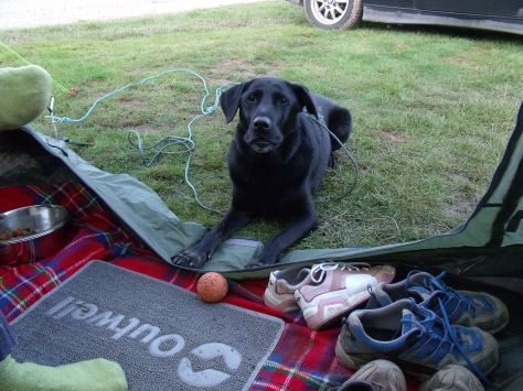There are lots of dog friendly camp sites in the Lakes. :)