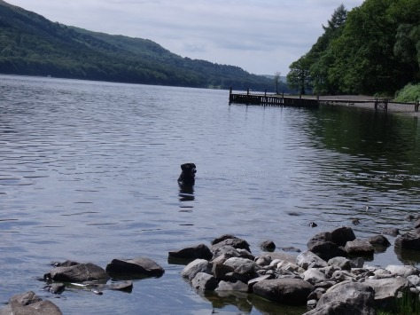"Coniston Water is the straightest  of the lakes, which is what attracted Donald Campbell to attempt the world water speed record in his boat, the bluebird. Coniston was also the inspiration for ""Swallows and Amazons""."