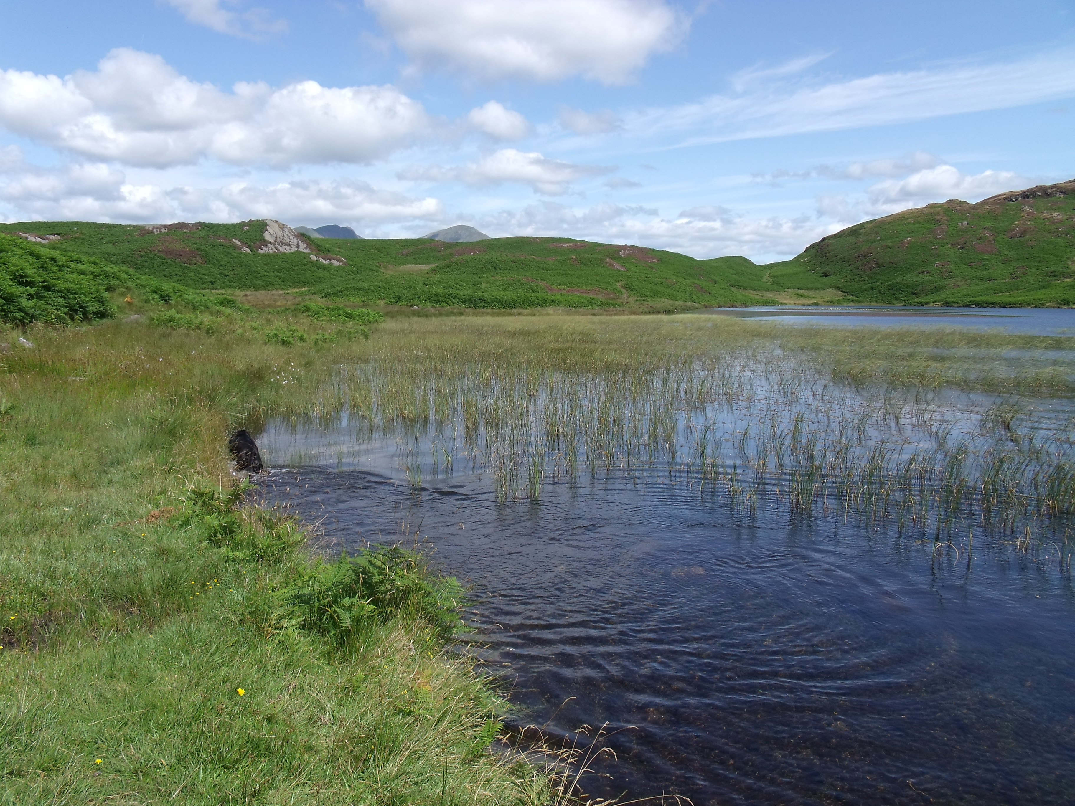 Beacon Tarn near Coniston is not accessable by road. We loved this little tarn tucked away in the fells.