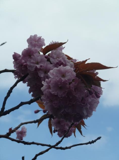 blossom 015