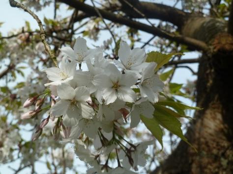 Pretty blossom.