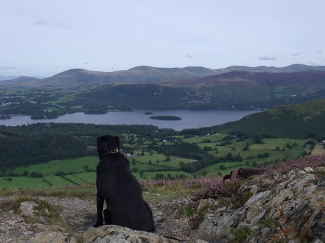 Jake,our labrador had of course got up there ages before me! Here he is enjoying the view of Derwent water in the Lake District.