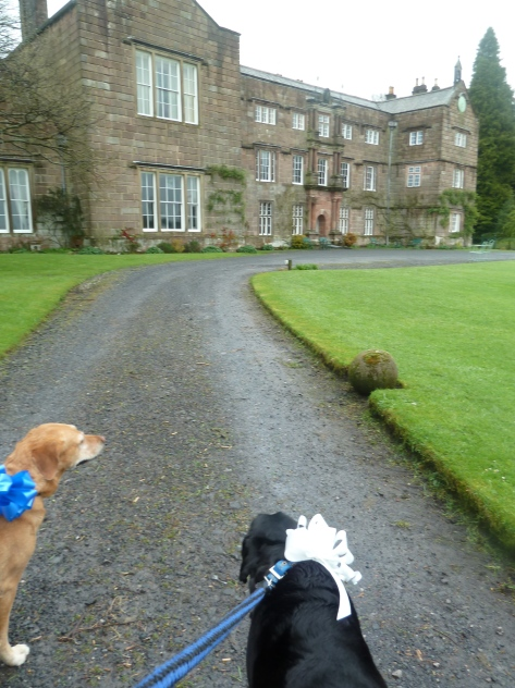 Billy and Bailey have a good walk round the grounds before the ceremony.