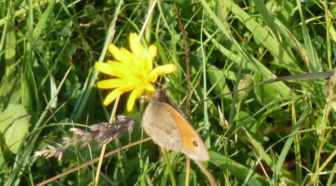 Chasing Butterflies.