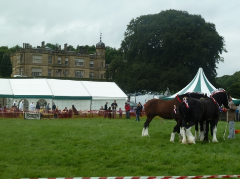 And here's a view of the showground with a couple of shire horses thrown in. :)