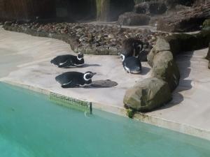 blackpool zoo 007