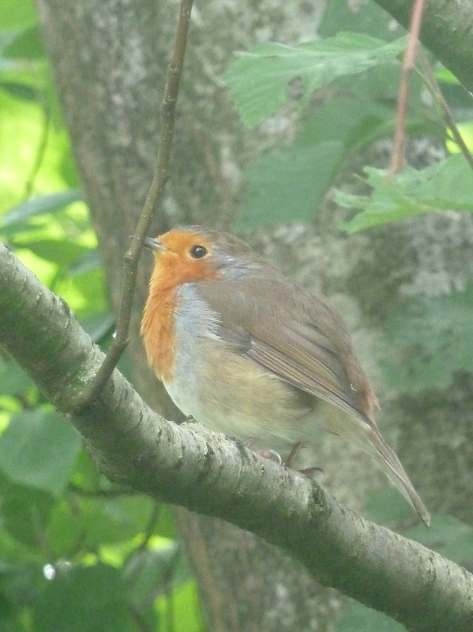 Mr Robin gets his close up!