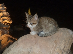 There were lots of cats at the hotel. Luckilly they were fed and looked after. :)