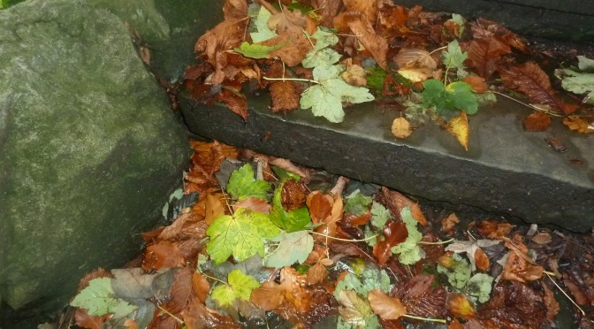 Autumn colours in the Park.