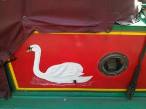 A swan peeks out.
