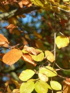 Golden Leaves.