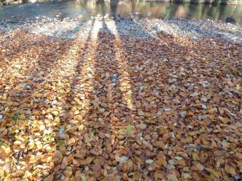 Carpet of leaves.