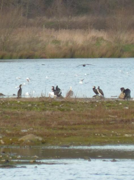 Water birds.