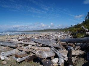 Driftwood.