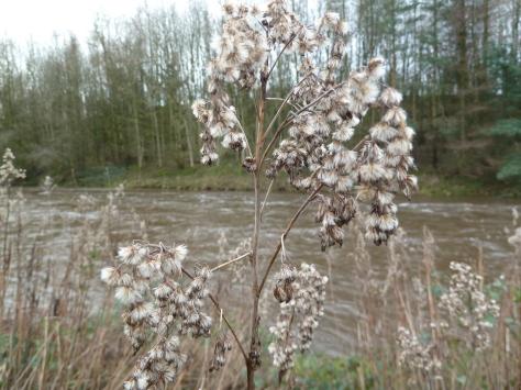 Winter river ribble.