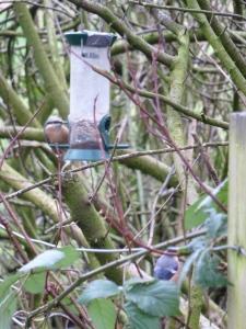 Bird feeder near the campsite by the Ribble. I spy a bullfinch. :)