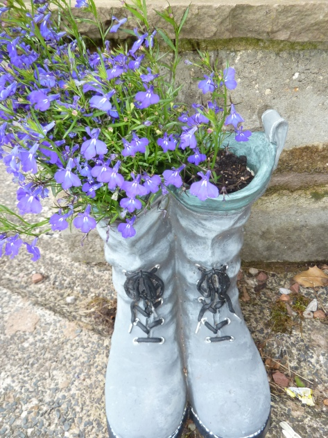 Blue blooms in boots. :)