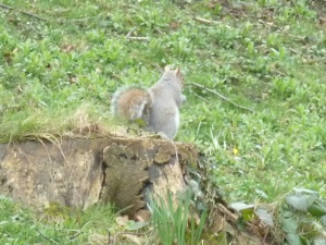 There were lots of squirrels out today. :)
