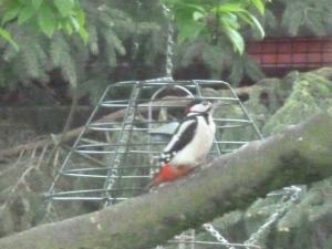Mr Woodpecker. :)