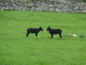 Lamb standoff.