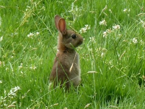 Cute Bunny () ()
