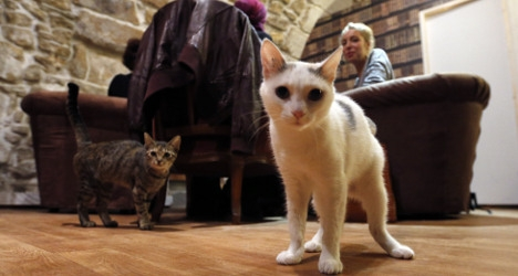 Chats in Le Cafe des Chats ( photo ~ The Local ~ France's news in English).