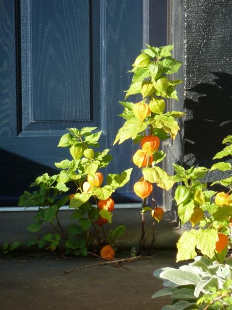 august autumn 047