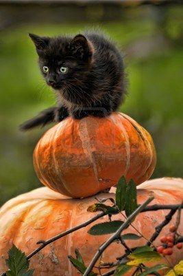 Pumpkin Puss.