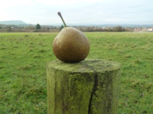 My walk started out somewhat Pear shaped.