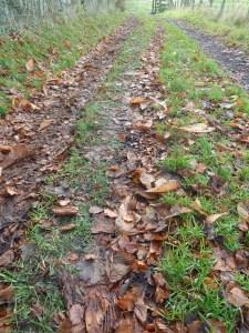 Leafy track.