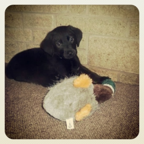 Baby Hugo and his duck. The duck and its replacement didn't last long!