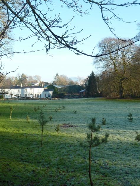 A frosty field.