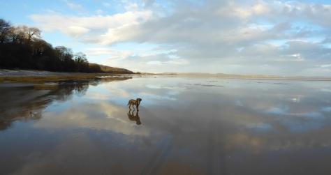 Hugo enjoying the beach.