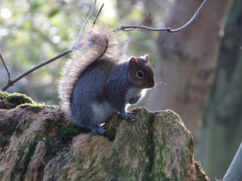 Squirrel in the grounds.