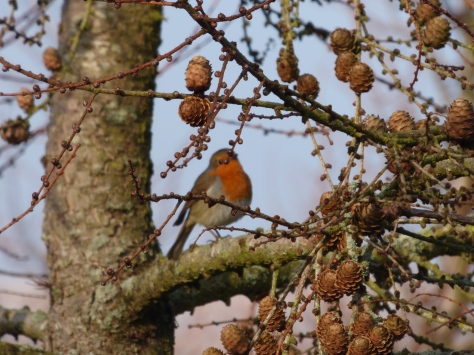 A friendly little robin.