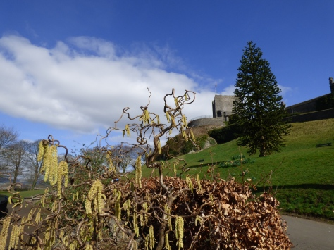 Catkins and the Castle.