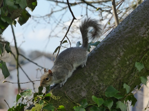 The obligatory squirrel.