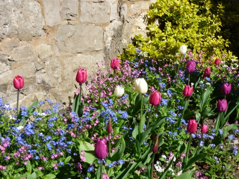 Tulips and forget me nots.