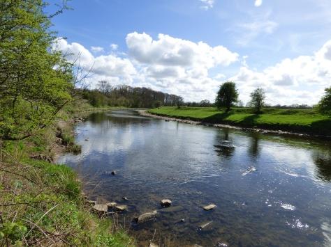 River Ribble.