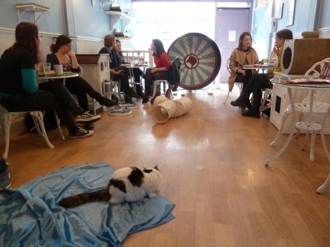 Lady Dinah's Cat Emporium at Bethnal Green.