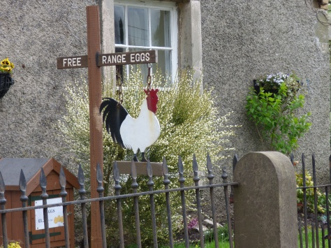 Anyone for free range eggs?