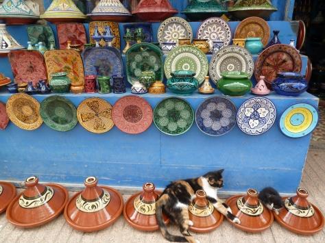 Moroccan Moggies.