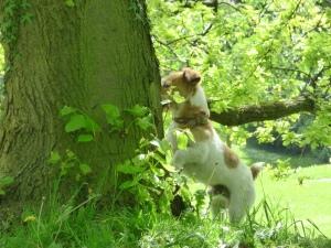 Parks resident squirrel catcher.
