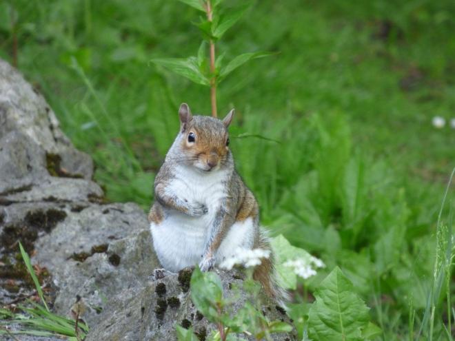 Squirrel Nutkin.