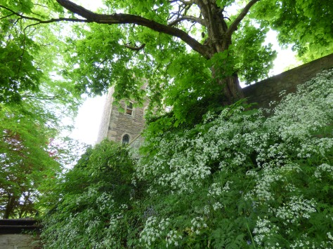 Castle museum peeking through the Cow Parsley.