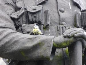 Bluetit finds a suitable perch.