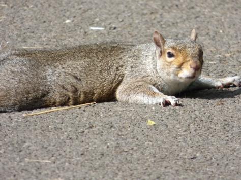 Even Squirrels sunbathe.