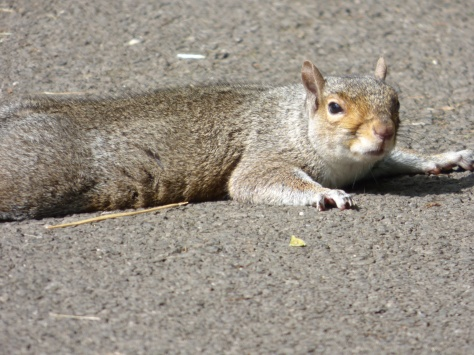 Even Squirrels sunbathe.
