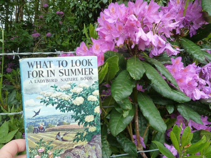 30 Days Wild ~ Days 16-21. Daisy Chains and Ladybird Nature Books.